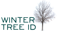 LCWS_WinterTreeId